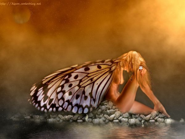 papillonnnfemmeee.jpg