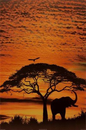 cieuxafricains.jpg